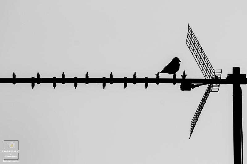Thinking Sparrow